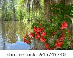 Azaleas Flowers Blooming By Th...
