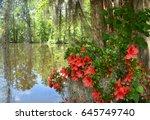 Azaleas Flowers Blooming By Th...