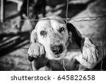 Dog abandoned behind bars ...