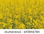 Texture Of Yellow Rape Flowers