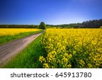 road through yellow rapeseed... | Shutterstock . vector #645913780