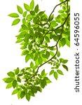 green leave on white background | Shutterstock . vector #64596055
