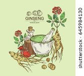 background with ginseng ... | Shutterstock .eps vector #645984130