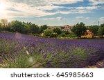 view of lavender fields under... | Shutterstock . vector #645985663
