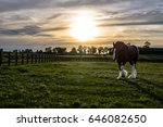 draft horse in a kentucky... | Shutterstock . vector #646082650