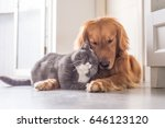 british cat and golden retriever | Shutterstock . vector #646123120