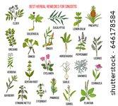 best herbal remedies for... | Shutterstock .eps vector #646178584