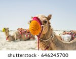 colorful camels in the desert.... | Shutterstock . vector #646245700