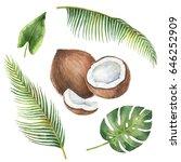 watercolor organic set of...   Shutterstock . vector #646252909