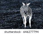 Portrait Of The Plains Zebra I...