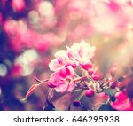 beautiful bright spring... | Shutterstock . vector #646295938