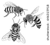 Hand Drawn Bees Sketch Set In...