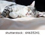 Stock photo dozy gray cat on the bed 64635241