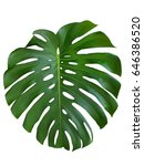 texture monstera leave tropical ... | Shutterstock . vector #646386520