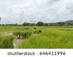 farmer on rice fields | Shutterstock . vector #646411996