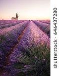 sunrise into lavender fields...   Shutterstock . vector #646437280