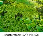 Sun Light On Lotus Leaf And...