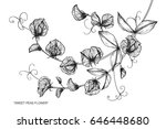 sweet peas flowers drawing and... | Shutterstock .eps vector #646448680