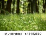 shot from sunny spring forest... | Shutterstock . vector #646452880