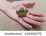 man with open hand of weed nugs.... | Shutterstock . vector #646456270