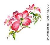 wildflower dogwood flower in a... | Shutterstock . vector #646478770