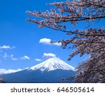 cherry blossom with fuji... | Shutterstock . vector #646505614