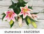 Beautiful Pink Lily Flowers On...