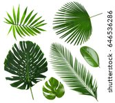 Stock photo different tropical leaves on white background 646536286