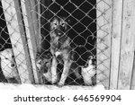animals behind bars | Shutterstock . vector #646569904