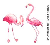 watercolor flamingo set. hand... | Shutterstock . vector #646575808