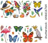 tropical garden birds ... | Shutterstock . vector #646616764