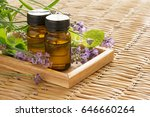 aroma oil with mint   lavender  | Shutterstock . vector #646660264