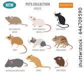 mice breeds icon set flat style ...