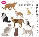 cat breeds icon set flat style... | Shutterstock .eps vector #646712734