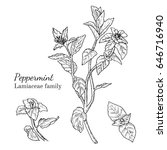 ink peppermint herbal... | Shutterstock .eps vector #646716940