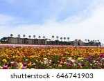 Colorful Flowers Fields In...
