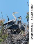 Young Herons In The Nest  Thre...