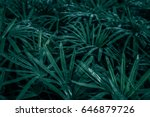 beautiful green leaves... | Shutterstock . vector #646879726