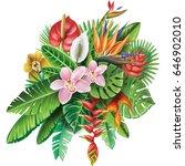 arrangement from tropical... | Shutterstock .eps vector #646902010