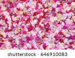 beautiful flowers as background | Shutterstock . vector #646910083