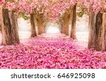 the romantic tunnel of pink... | Shutterstock . vector #646925098