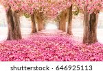 the romantic tunnel of pink... | Shutterstock . vector #646925113