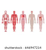 different systems of human body ... | Shutterstock .eps vector #646947214