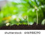 new young plant growing in the... | Shutterstock . vector #646988290