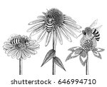 Bees On Honey Flowers Sketched...