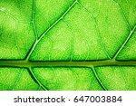 leaf natural and light...   Shutterstock . vector #647003884