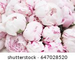 white and pink peonies.... | Shutterstock . vector #647028520