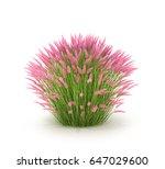 ornamental grass and grasses... | Shutterstock . vector #647029600