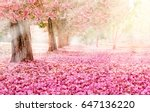 the romantic tunnel of pink... | Shutterstock . vector #647136220