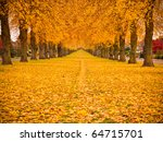 Tree Lined Avenue In Autumn...